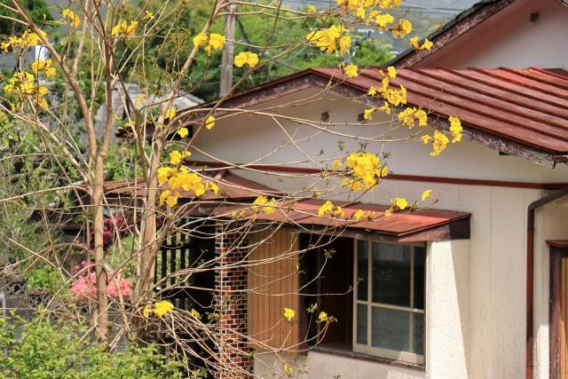 黄色の花手前、空き家外観