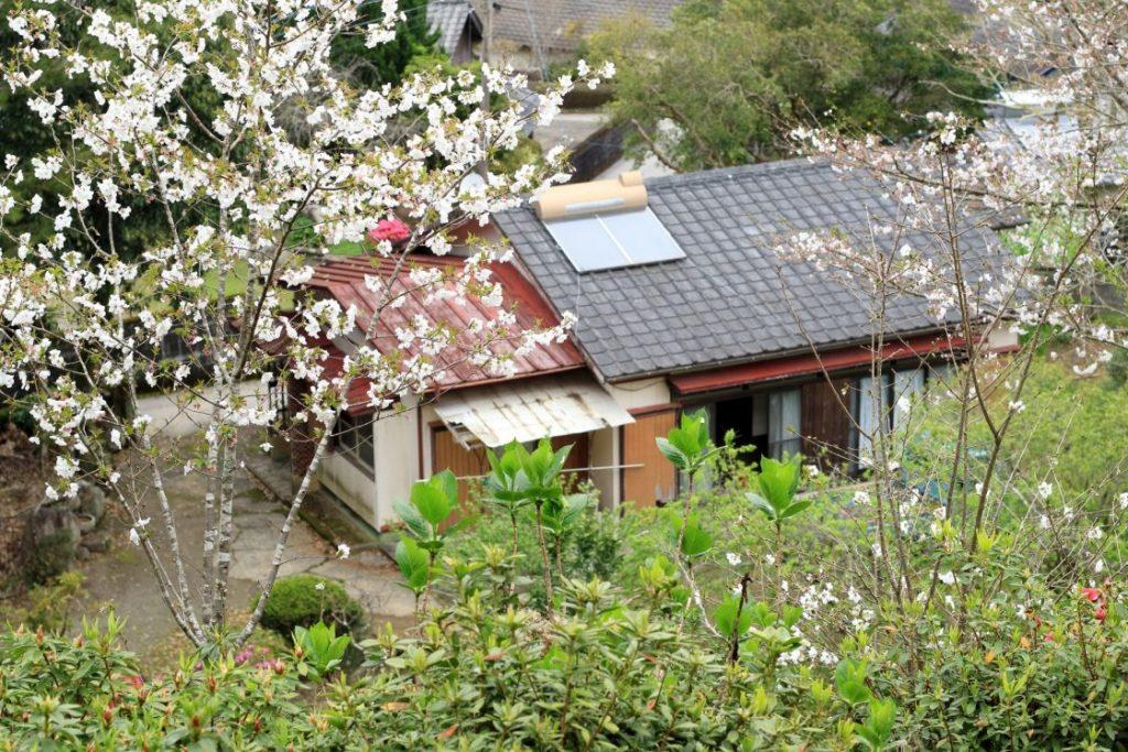 花と木の間から空き家を見下ろす