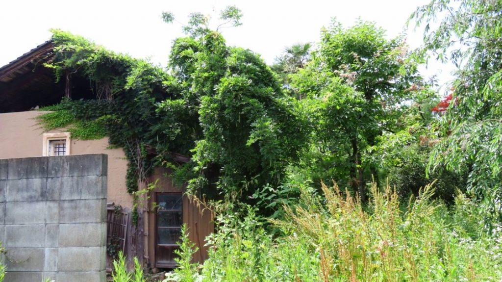 自然の生い茂る空き家